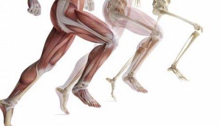 Perdita di massa muscolare e accumulo di grasso: Come contrastarle?
